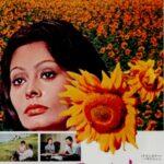『ひまわり(I Girasoli / Sunflowr)』 永遠に咲き誇るひまわり畑のかなしみ